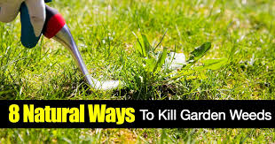 how to kill weeds in garden. garden weeds how to kill in plant care today