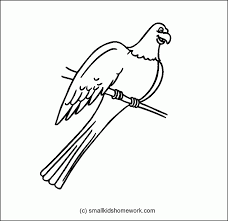 8TxKnGnTp parrot outline coloring home on parrot outline template