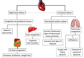Pathophysiology Of Chf Signs And Symptoms Of Urinary System Diseases The Urinary Syndrome