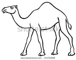 Small Picture Cartoon Illustration Dromedary Camel Coloring Book Stock Vector