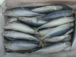 Image result for mackerel fish