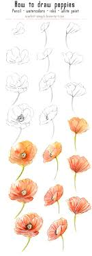 17 learn how to draw and watercolor poppies