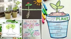 17 Creative Ways To Teach Plant Life Cycle Weareteachers