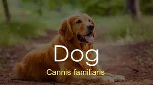 Dog Scientific Classification Chart Scientific Names Of Some Common Animals Education Today News