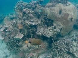 underwater at modessa island photo essay travelnuity triggerfish at modessa island