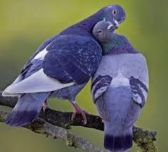 Resultado de imagen para palomas oleos