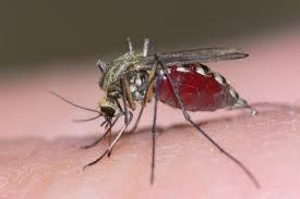 Resultat d'imatges de virus zika