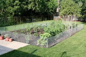 Small Picture Backyard Vegetable Garden Design decorating clear