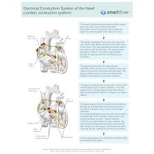 Heart Flow Chart Electrical Conduction System Of The Heart