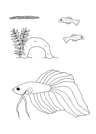 Small Picture Betta Fish Colors Coloring Coloring Pages