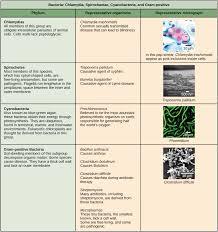 Bacteria Classification Prokaryote Classification And Diversity Article Khan Academy