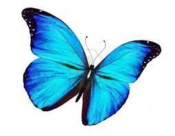 butterfly | Blue butterfly, Freedom is a <b>state of mind</b>, <b>Butterfly</b>