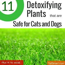 indoor plants poisonous to cats detoxifying plants that are safe for cats and dogs house plants