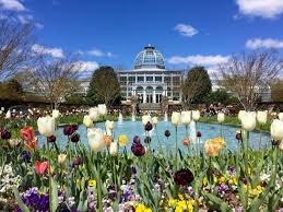 lewis ginter botanical garden tulips and conservatory richmond virginia