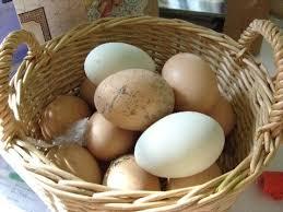 Resultado de imagen de huevos de gallinas camperas
