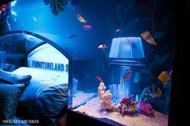 fish tank headboard above bed furnitureland south 5 Cool Custom Fish Tank  Headboard for your Bed