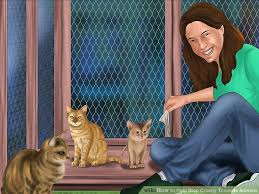 ways to help stop cruelty towards animals wikihow image titled help stop cruelty towards animals step 12