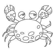 Small Picture CRAB coloring pages 5 SEA ANIMALS and sea creatures coloring