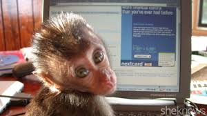 10 things i learned about pahood from raising a baby monkey sheknows