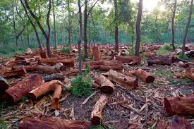 experts express concern over massive deforestation