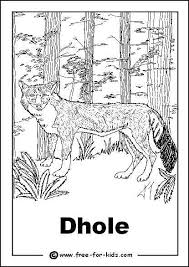 Small Picture Endangered Animals Colouring Pages