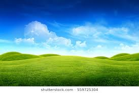 Image Of Green Grass Field And Bright Blue Images Stock Photos
