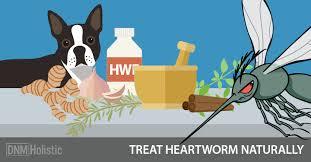 natural heartworm treatment. Natural Heartworm Treatment A