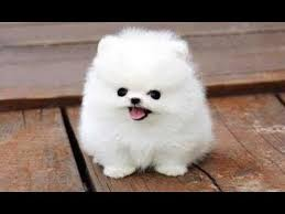 top 10 funny puppies a cute puppy