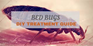 Bed Bug plete Guide 1020x510