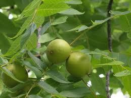 Tree Identification  LoveToKnowGreen Fruit Tree Identification