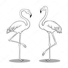 Roze Flamingo Vogel Kleurplaat Boek Vector Stockvector