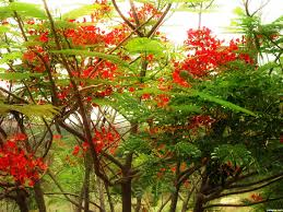 flower tree pictures. Fine Flower Red Flower Tree To Flower Tree Pictures I