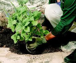 Small Picture Perennials Care Guide