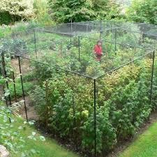 garden photo frames. Steel Walk In Fruit Cage Garden Photo Frames