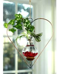 heart hanging water garden live plants included