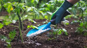 4 diffe types and forms of fertilizers