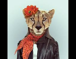zoo animals in clothes. Plain Animals Zoo Portraits Animals In Clothing Picture  Portraits Showcase  Human Garb  ABC News Intended In Clothes