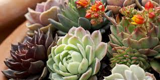 perfect office plants. Interesting Office Plants That Don T Need Sunlight By Landscape Little Water Succulents Perfect