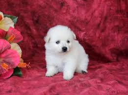 cute puppies for sale 2014.  Sale Pet For Sale In Cute Puppies For 2014