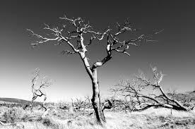 dead tree close