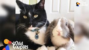Feisty <b>Cat</b> Plays SO Gently With His <b>Bunny</b> Best Friend | The Dodo ...