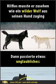 Er Sah Hilflos Zu Als Ein Wilder Wolf Auf Seinen Hund Zukam