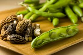 fava beans broad beans benefits nutrition side effects and information
