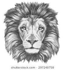 lion drawing. Unique Drawing Original Drawing Of Lion Isolated On White Background For Lion Drawing G