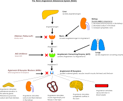 Arb Conversion Chart Angiotensin Ii Receptor Blocker Dosing Chart
