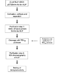 Protein Purification Chart Process Flow Chart For Hlif The Major Steps Of The