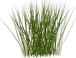 Tall Grass Transparent PNG Pictures Free Icons and PNG Backgrounds