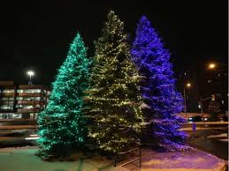 Bayshore Drive Christmas trees in Ottawa. Tony Caldwell Tony Caldwell /  Postmedia Network