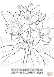 Small Picture West Virginia State Flower coloring page Free Printable Coloring