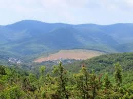 Растительность Краснодарского края Флора Кубани Растительность Краснодарского края